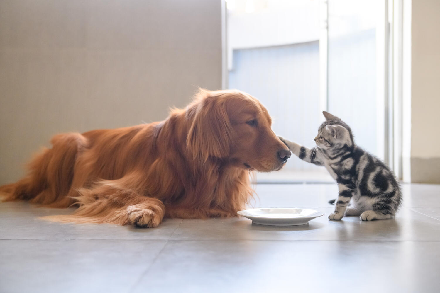 Dog and kitten photo to demonstrate animal nutrition